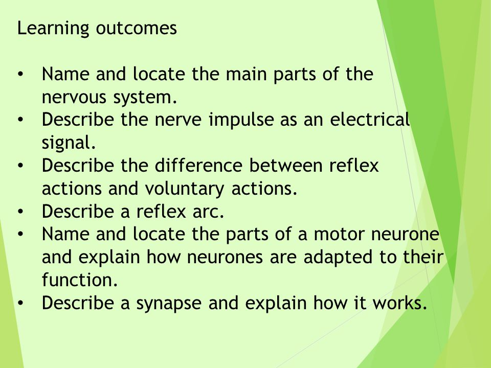 Learning outcomes Name and locate the main parts of the nervous system. Describe the nerve impulse as an electrical signal.