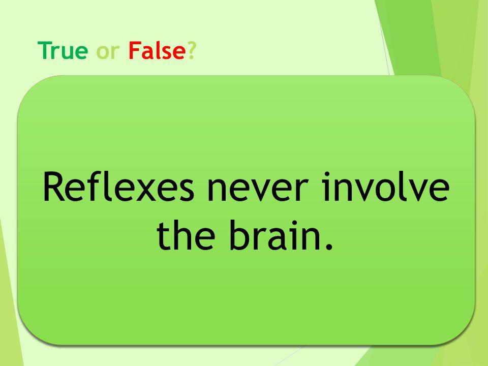 Reflexes never involve the brain. Reflexes never involve the brain.