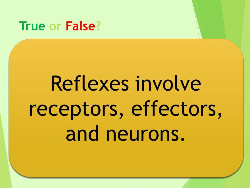 Reflexes involve receptors, effectors, and neurons.