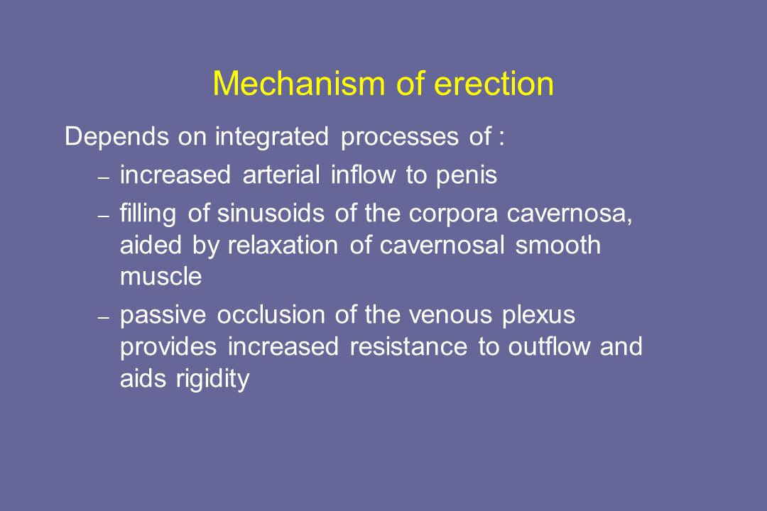 Mechanism of erection Depends on integrated processes of :