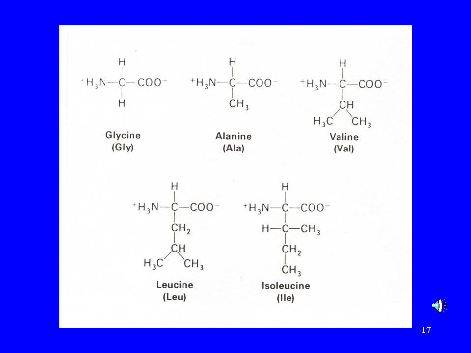 These are some of the common amino acids