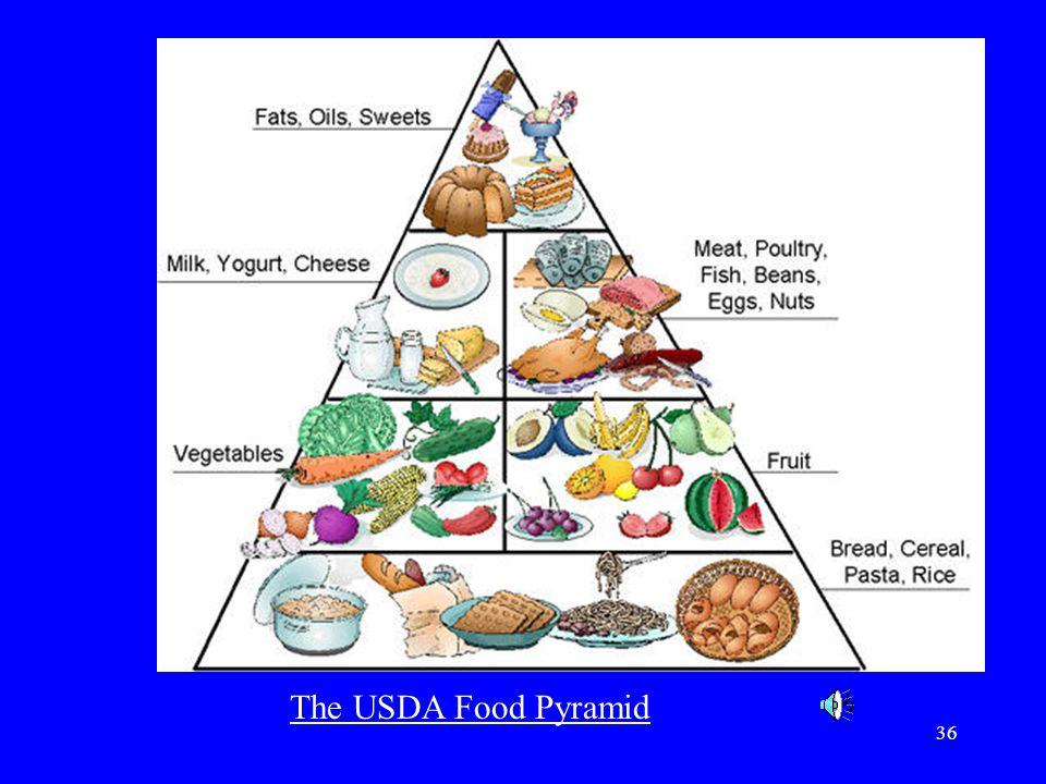 The USDA Food Pyramid