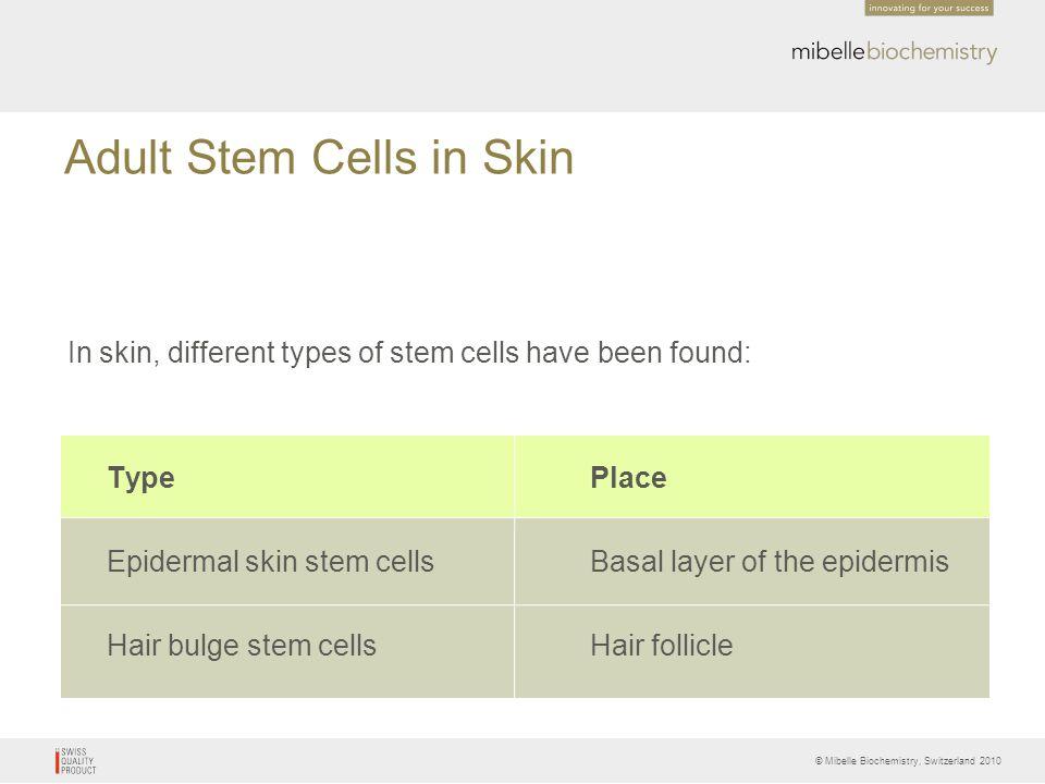 Adult Stem Cells in Skin