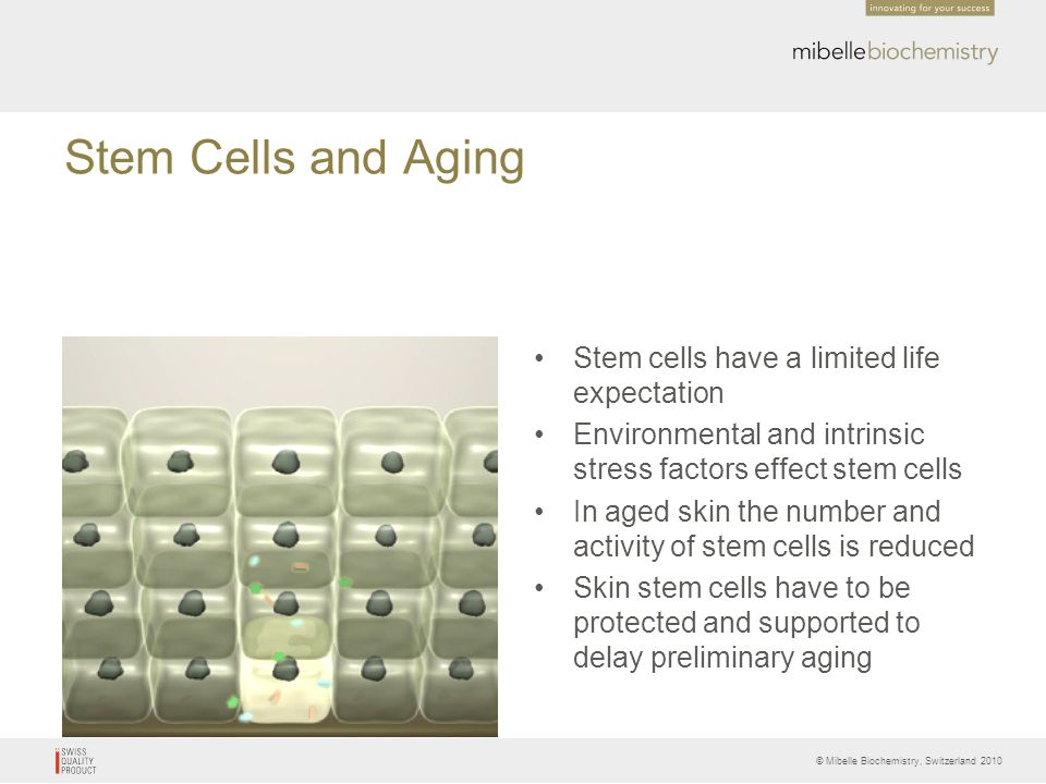 Stem Cells and Aging Stem cells have a limited life expectation