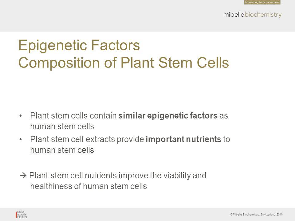 Epigenetic Factors Composition of Plant Stem Cells