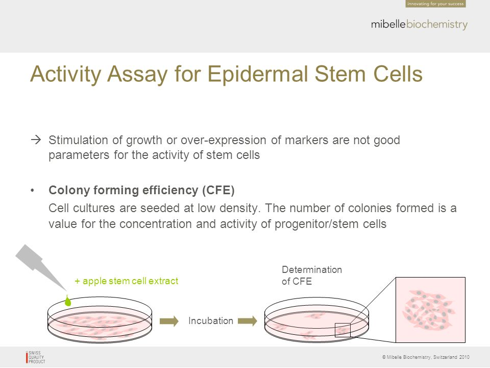 Activity Assay for Epidermal Stem Cells