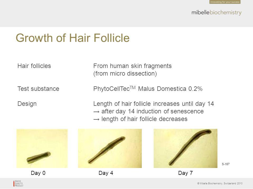 Growth of Hair Follicle