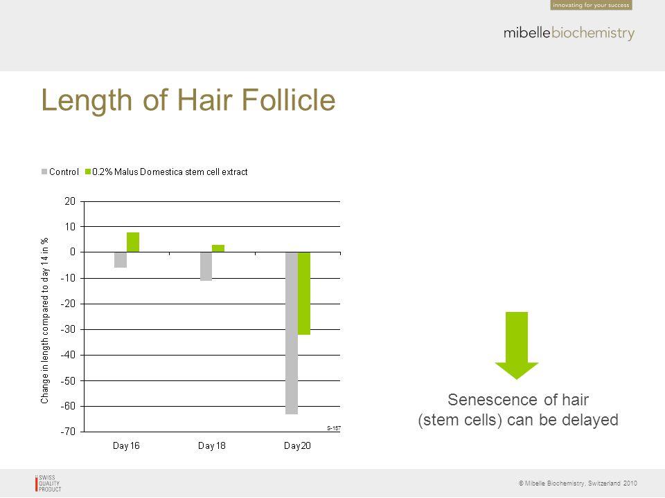 Length of Hair Follicle