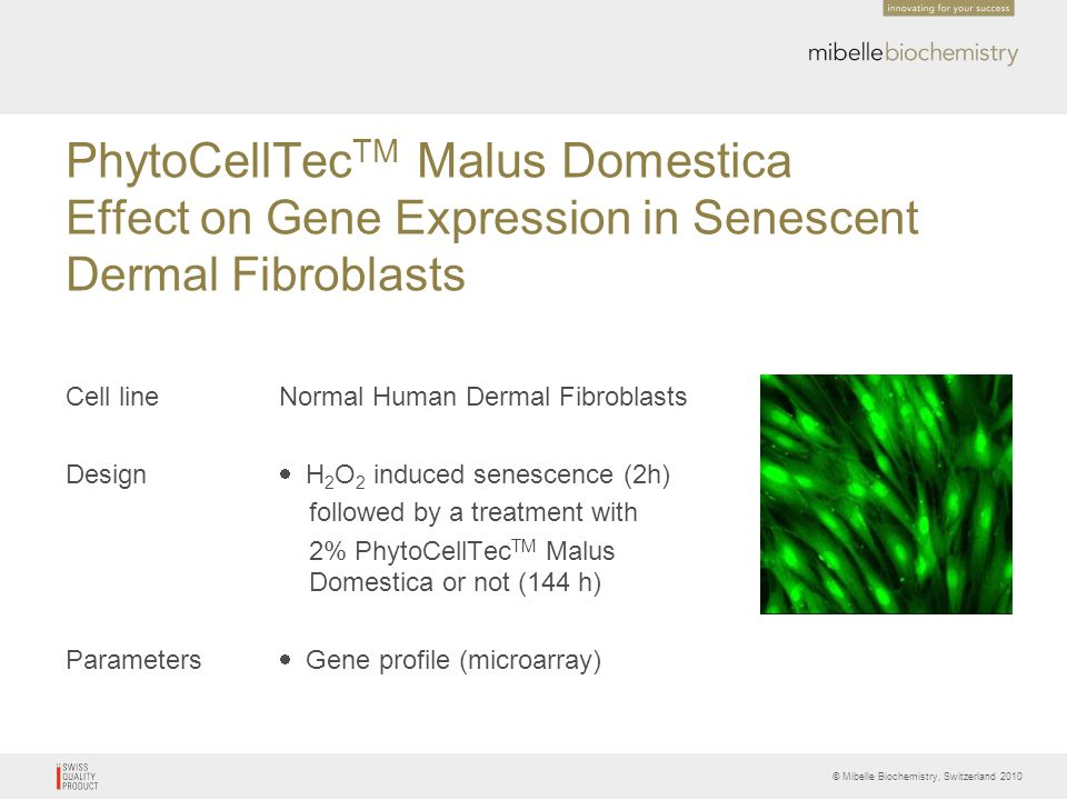 PhytoCellTecTM Malus Domestica Effect on Gene Expression in Senescent Dermal Fibroblasts
