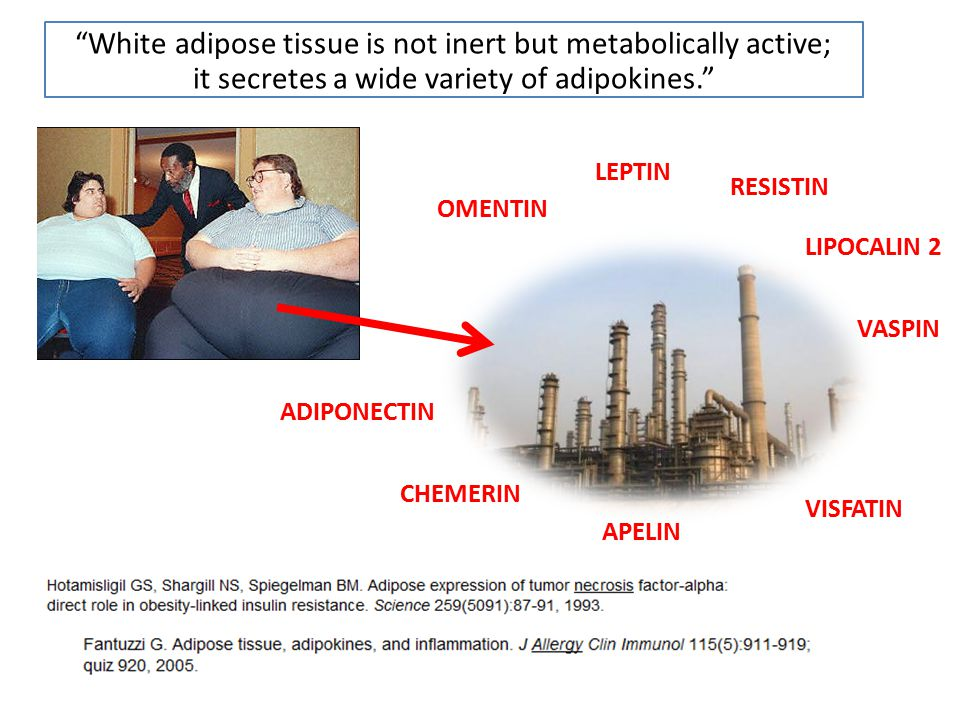 White adipose tissue is not inert but metabolically active;