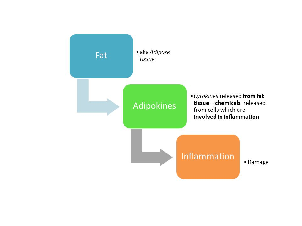 Fat Adipokines Inflammation aka Adipose tissue