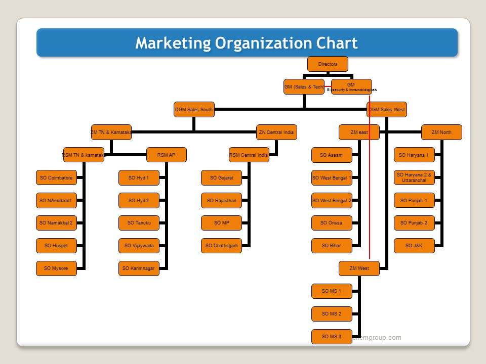 Marketing Organization Chart