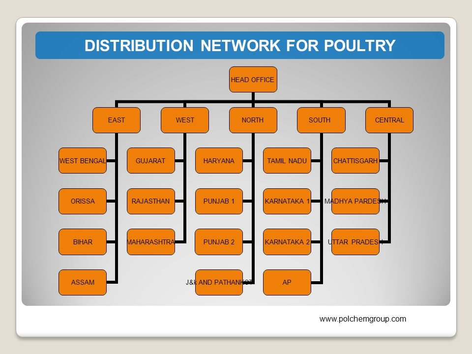 DISTRIBUTION NETWORK FOR POULTRY