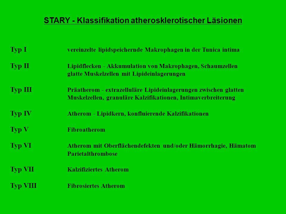 STARY - Klassifikation atherosklerotischer Läsionen