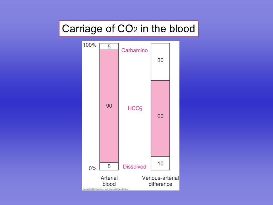 Carriage of CO2 in the blood