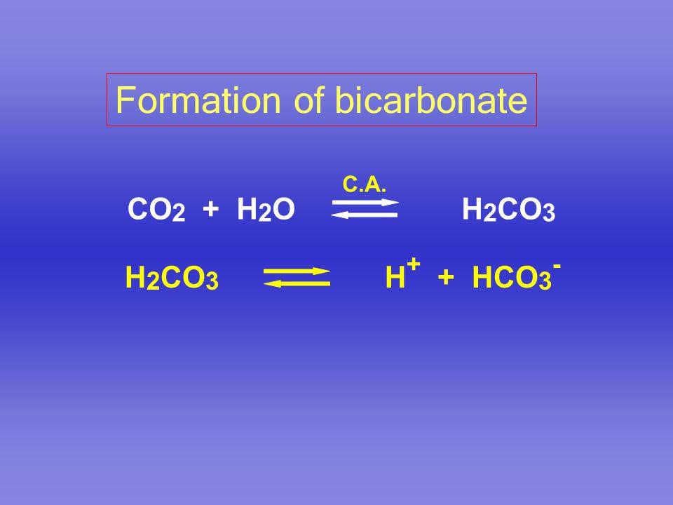 Formation of bicarbonate