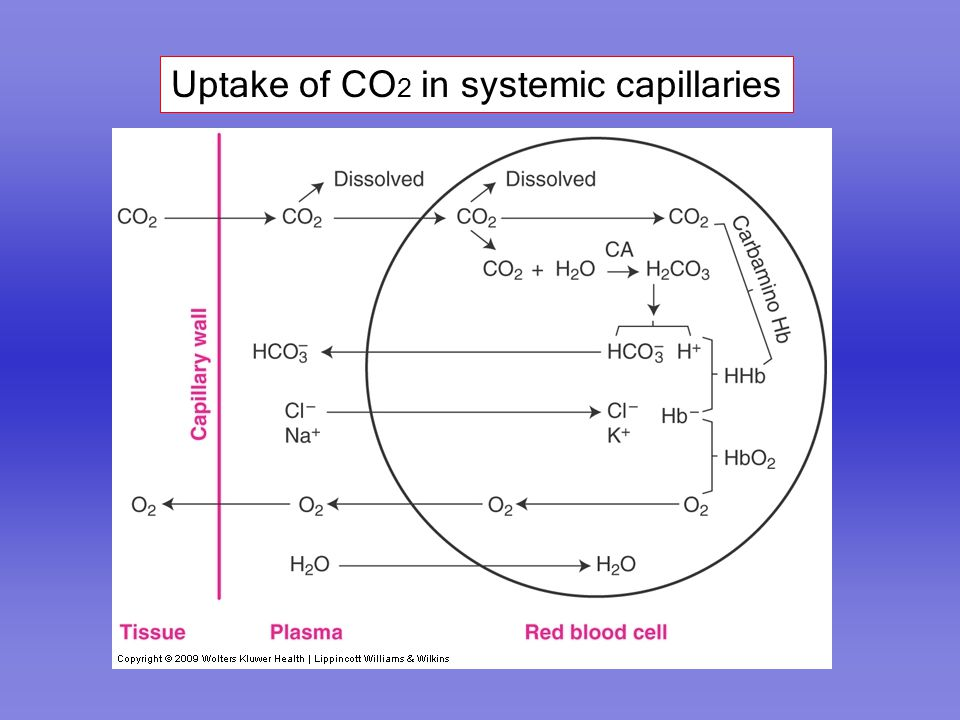 Uptake of CO2 in systemic capillaries