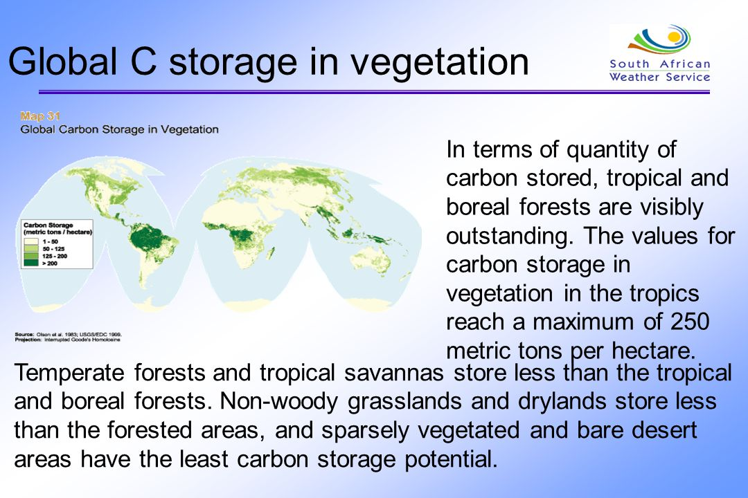 Global C storage in vegetation