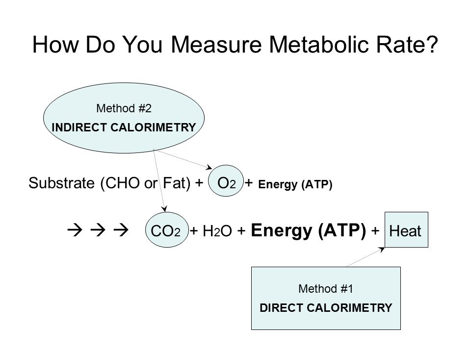 How Do You Measure Metabolic Rate