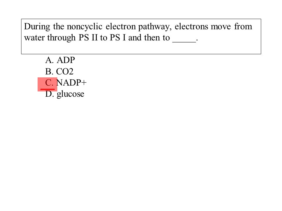 During the noncyclic electron pathway, electrons move from water through PS II to PS I and then to _____. A. ADP B. CO2 C. NADP+ D. glucose