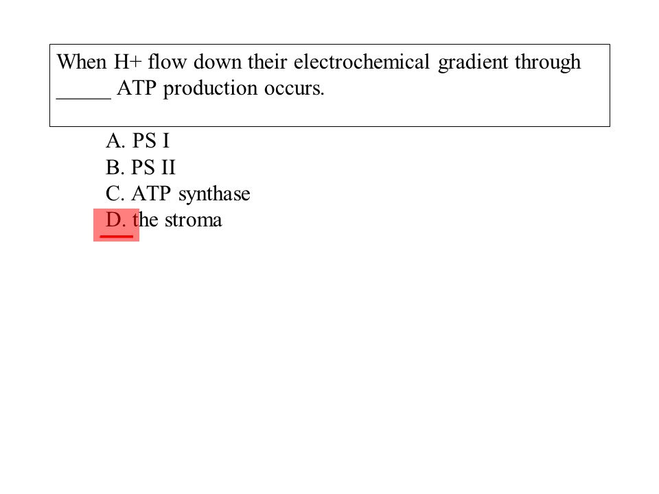 When H+ flow down their electrochemical gradient through _____ ATP production occurs. A. PS I B. PS II C. ATP synthase D. the stroma