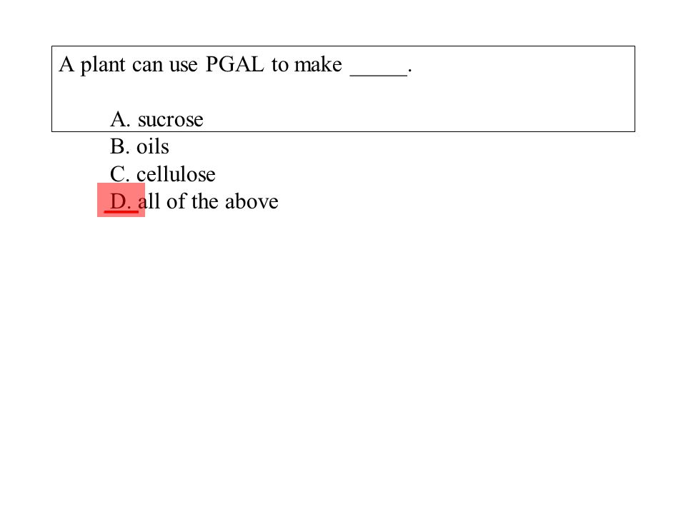 A plant can use PGAL to make _____. A. sucrose B. oils C. cellulose D