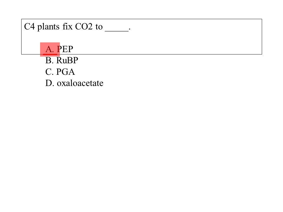 C4 plants fix CO2 to _____. A. PEP B. RuBP C. PGA D. oxaloacetate