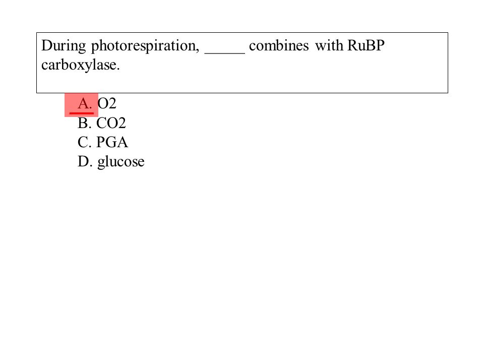 During photorespiration, _____ combines with RuBP carboxylase. A. O2 B