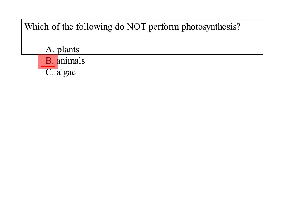 Which of the following do NOT perform photosynthesis. A. plants B