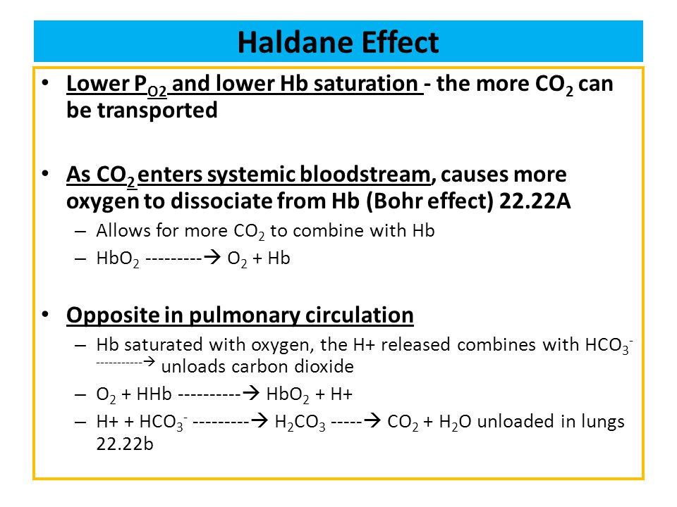 Haldane Effect Lower PO2 and lower Hb saturation - the more CO2 can be transported.