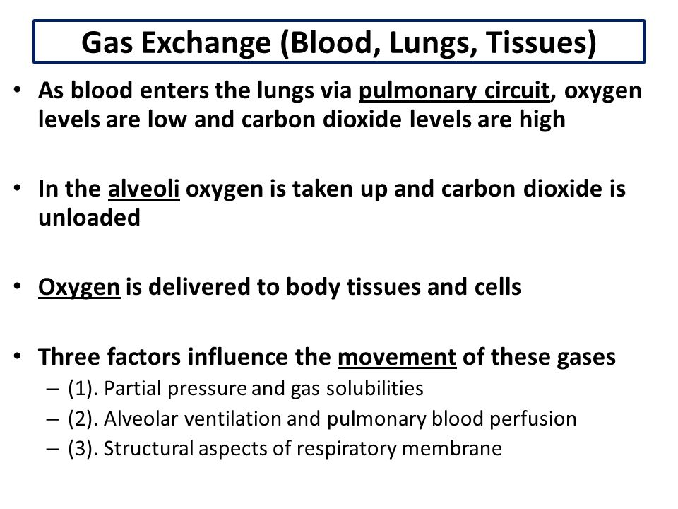 Gas Exchange (Blood, Lungs, Tissues)