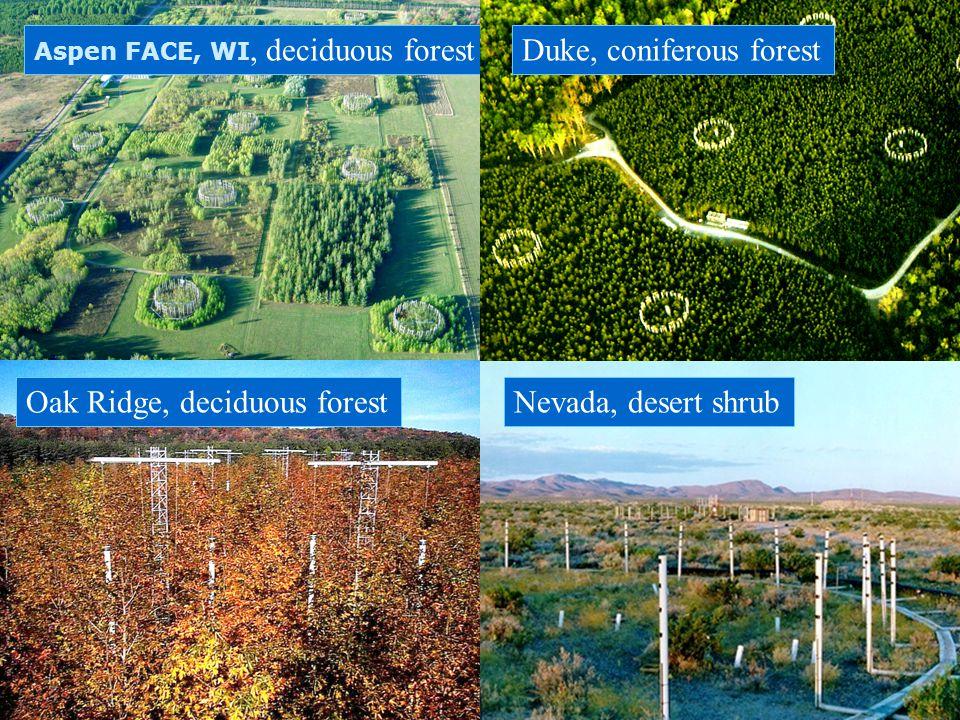 Duke, coniferous forest