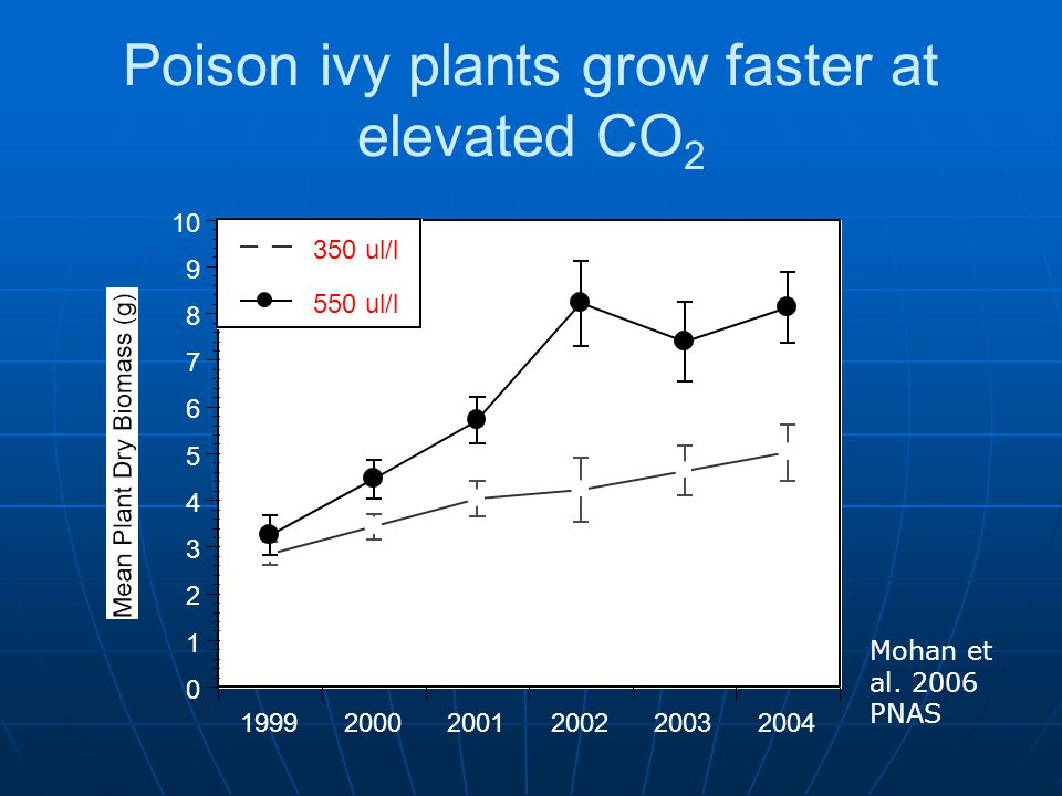 Poison ivy plants grow faster at elevated CO2