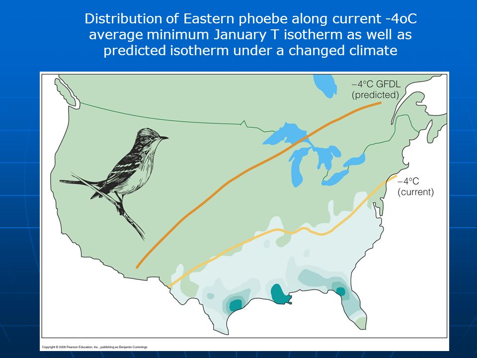 Distribution of Eastern phoebe along current -4oC average minimum January T isotherm as well as predicted isotherm under a changed climate