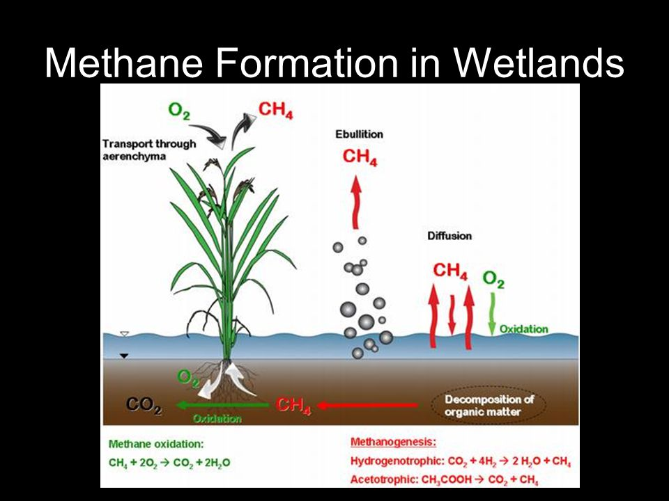 Methane Formation in Wetlands