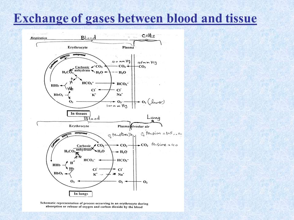 Exchange of gases between blood and tissue