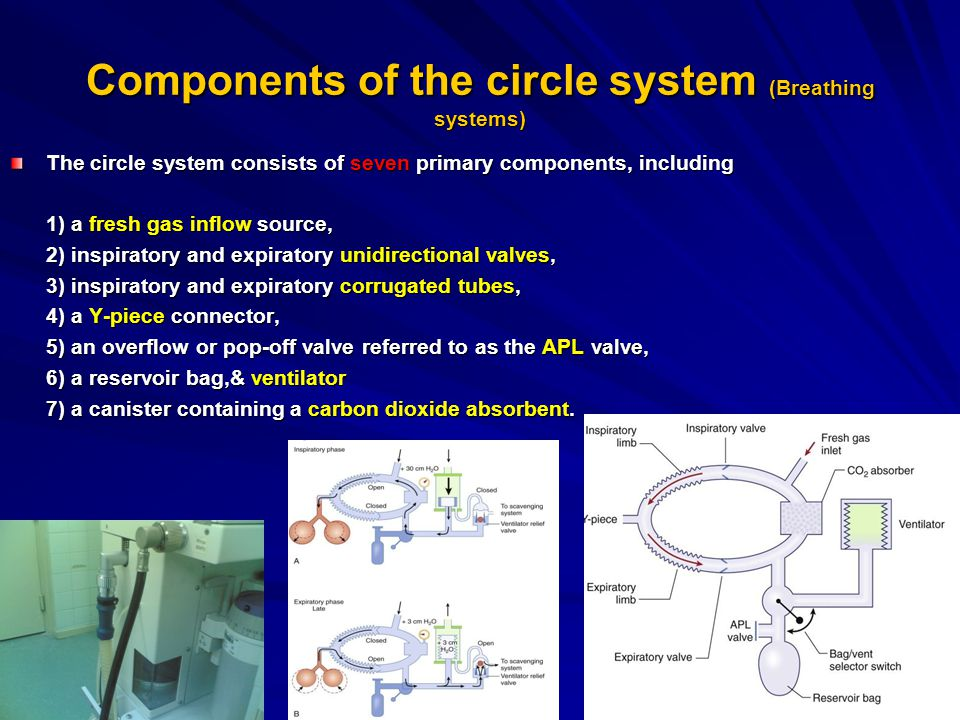 Components of the circle system (Breathing systems)