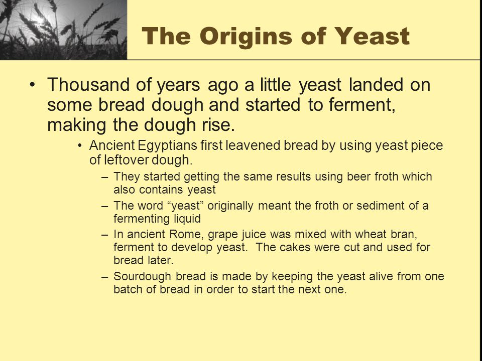 The Origins of Yeast Thousand of years ago a little yeast landed on some bread dough and started to ferment, making the dough rise.