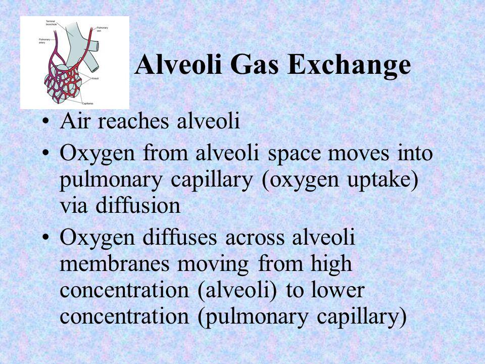 Alveoli Gas Exchange Air reaches alveoli