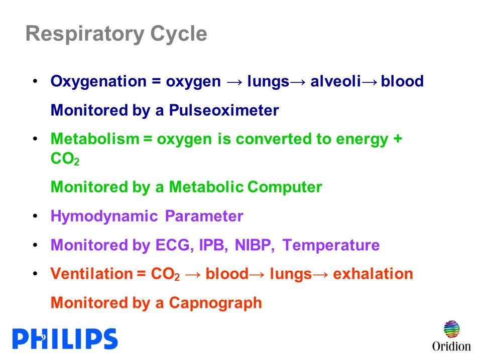 Respiratory Cycle Oxygenation = oxygen → lungs→ alveoli→ blood