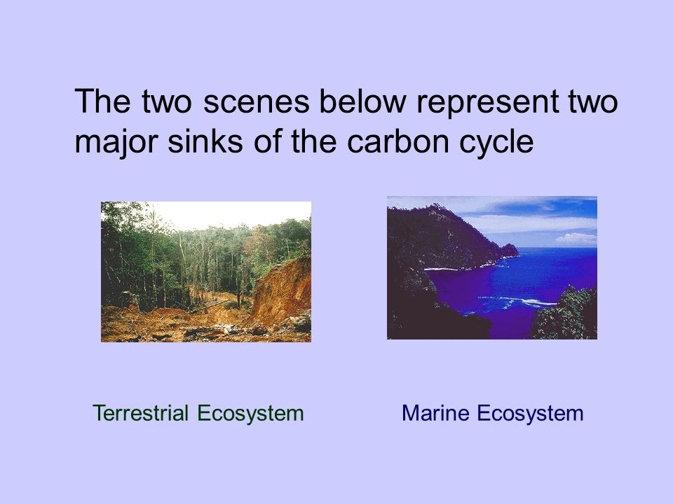 The two scenes below represent two major sinks of the carbon cycle
