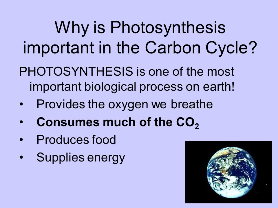 Why is Photosynthesis important in the Carbon Cycle