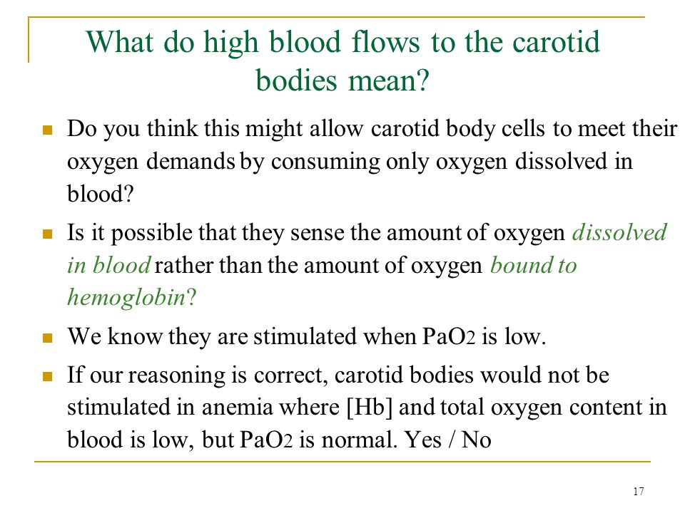 What do high blood flows to the carotid bodies mean