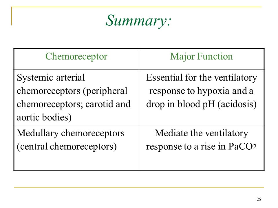 Mediate the ventilatory response to a rise in PaCO2