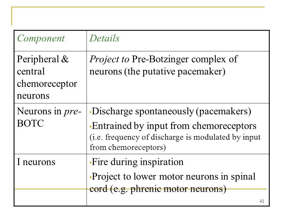 Component Details. Peripheral & central chemoreceptor neurons. Project to Pre-Botzinger complex of neurons (the putative pacemaker)