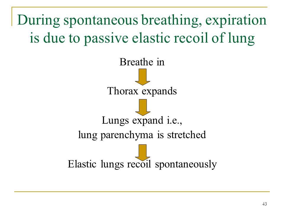 During spontaneous breathing, expiration is due to passive elastic recoil of lung