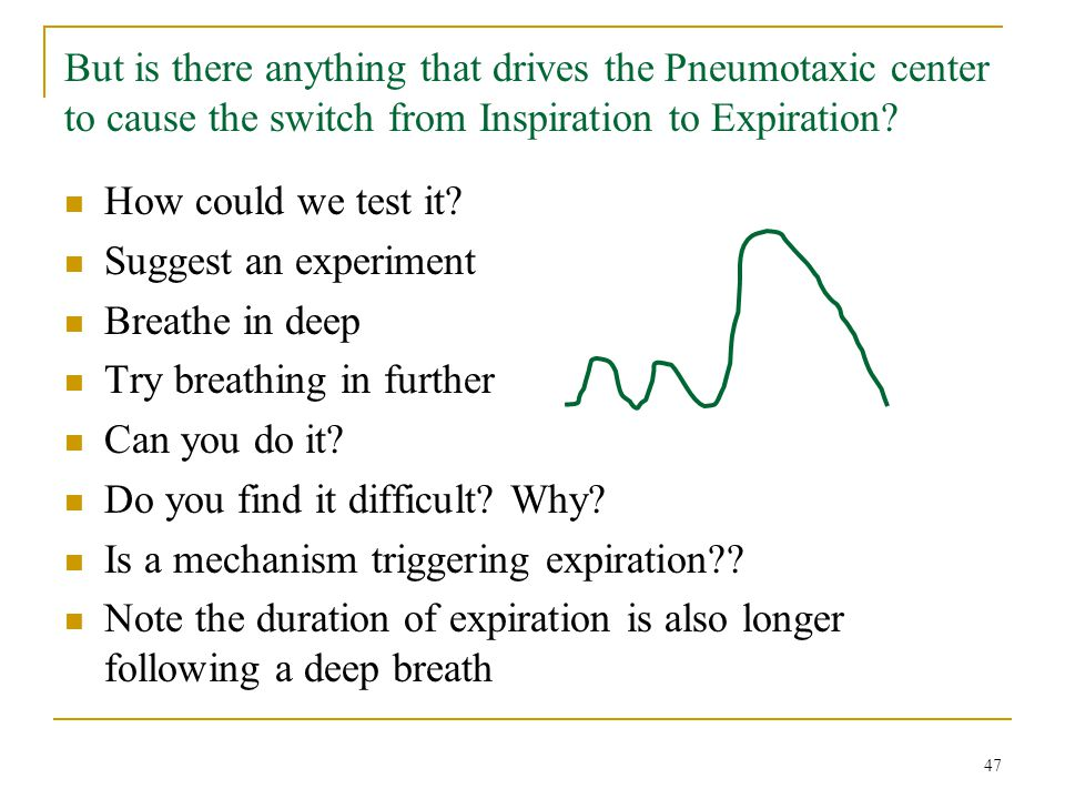 But is there anything that drives the Pneumotaxic center to cause the switch from Inspiration to Expiration