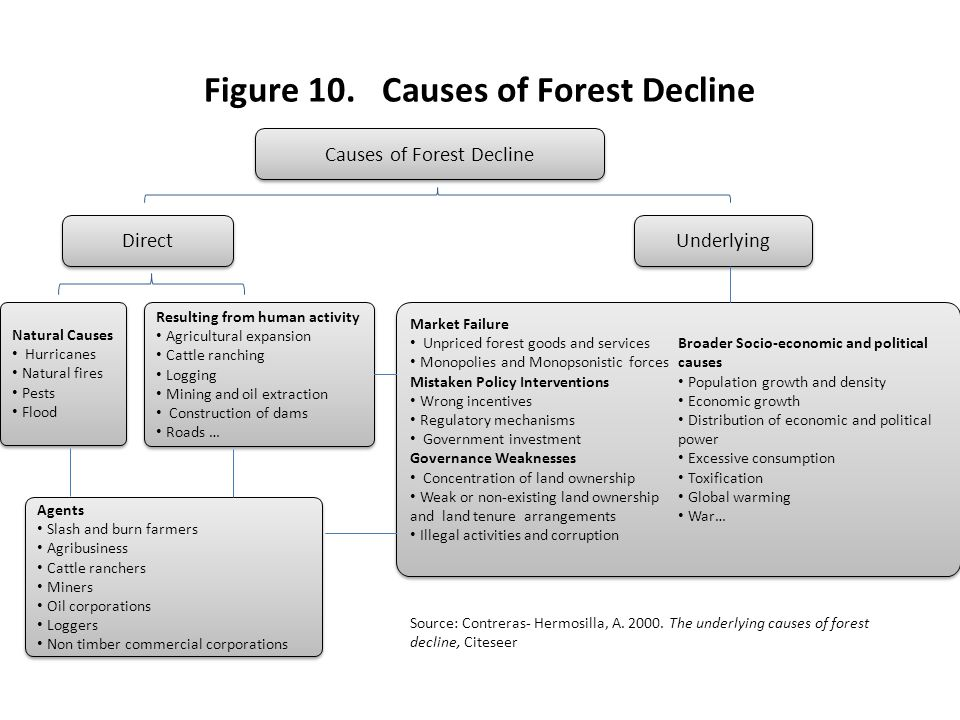 Figure 10. Causes of Forest Decline
