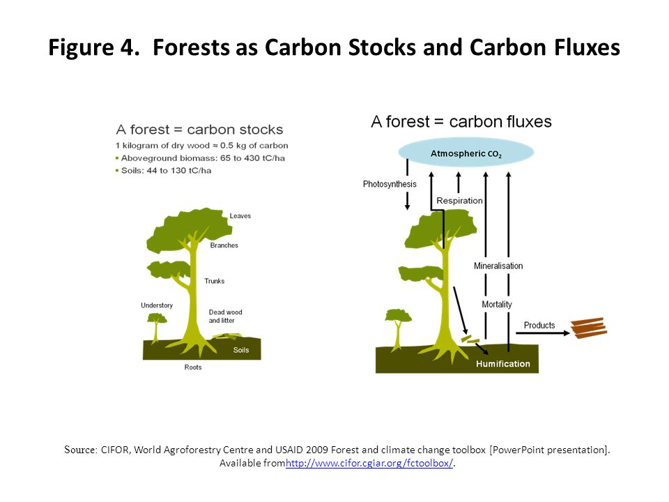Figure 4. Forests as Carbon Stocks and Carbon Fluxes