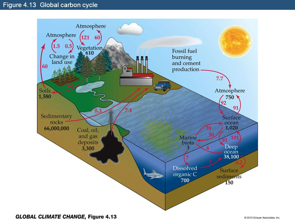 Figure 4.13 Global carbon cycle